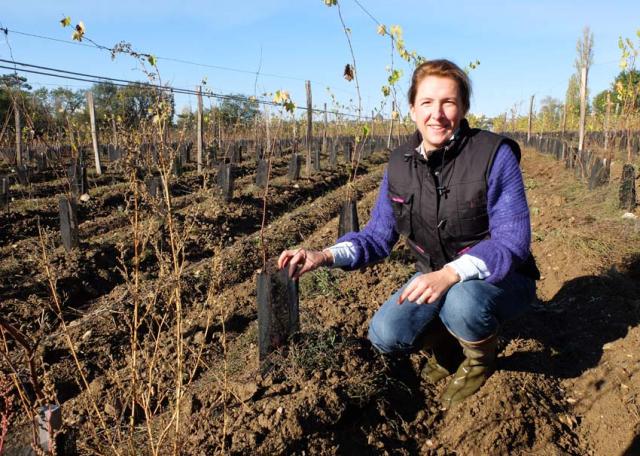 1carole_kohler_new_plantings