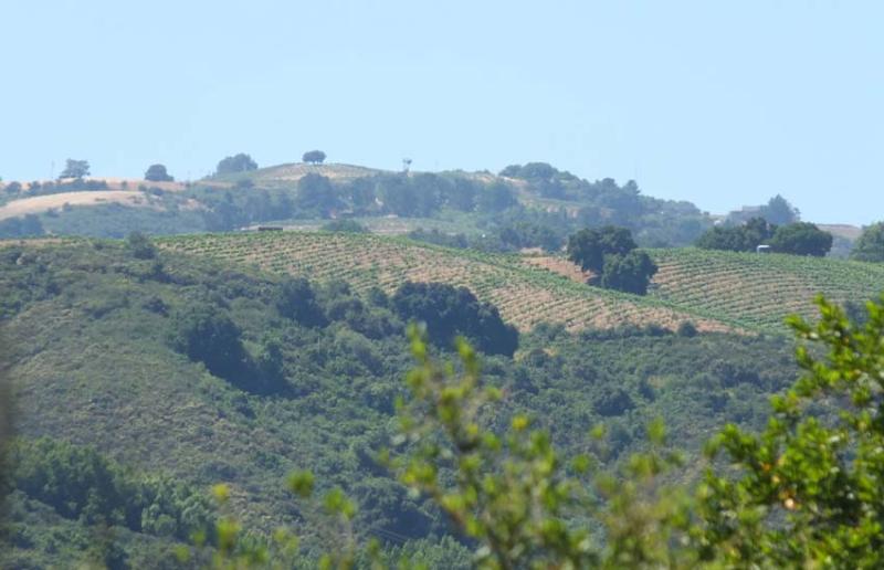 1p_martin_ray_montebello-ridge