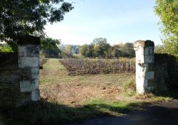 1carole_kohler_vineyard_gate