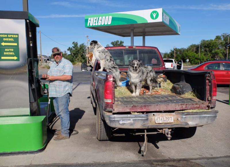 1farmer_pickup_3dogs