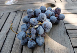 1charmasson_red_grapes