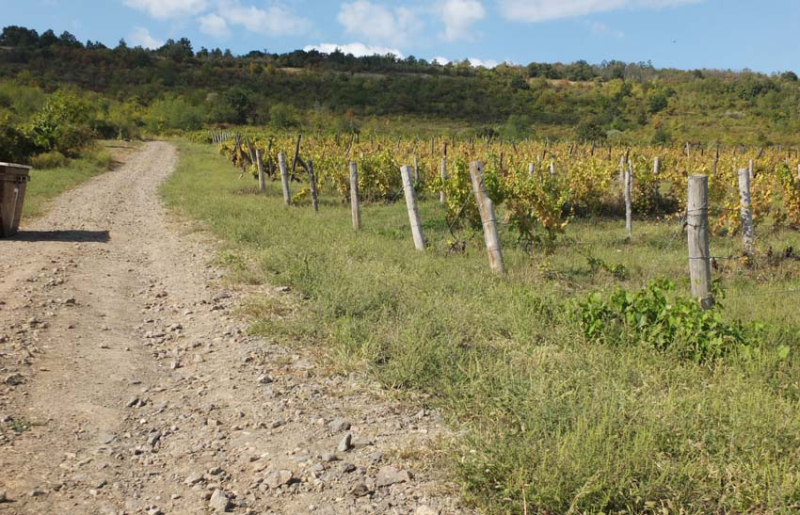 1major_levente_vineyard_slope
