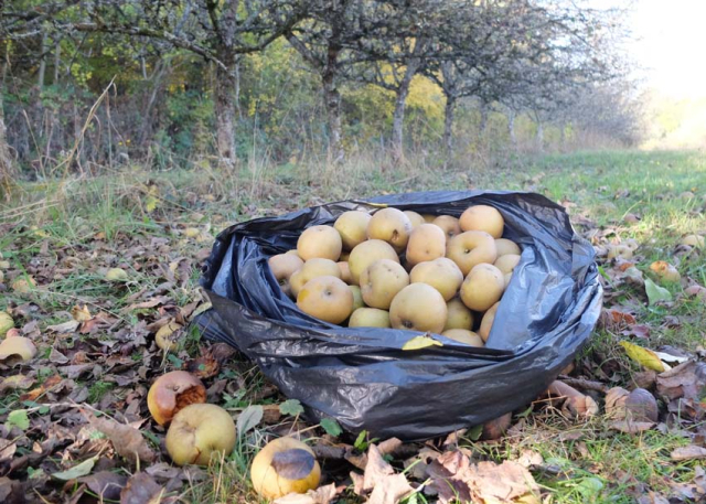 1news_foraging_fruits_burgundy