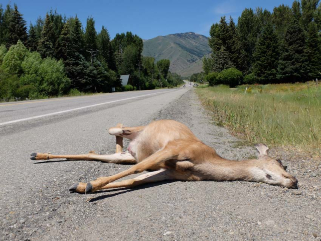 1news_roadside_casualty_idaho