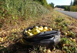 1news_foraging_fruits_along_road