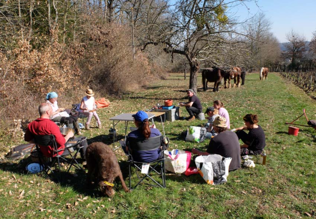 1draft_horse_picnic