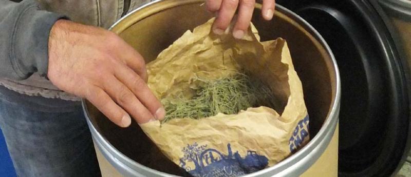 1laurent_saillard_herbs_horsetail