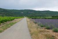 1mazel_lavender_road