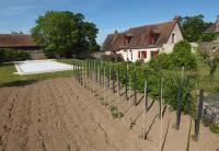 1clos_meslerie_southern_parcel_veg_garden