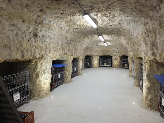 1table_rouge_bottle_cellar