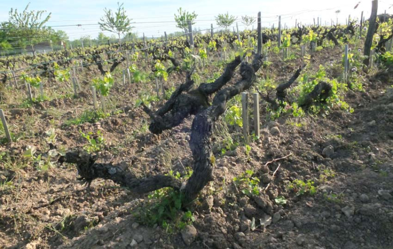 1table_rouge_old_chenin