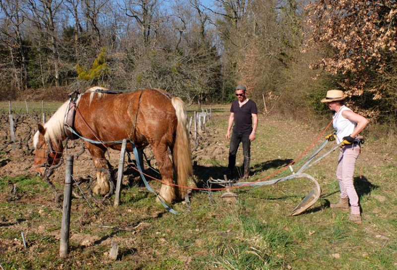 1draft_horse_philippe_emily