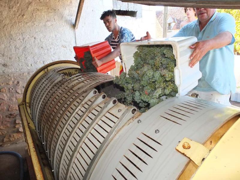 1harvest_lunotte_sauvignon_filling_press