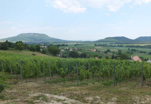 1istvan_bencze_balaton_vineyards