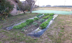 1matsuse_water_vegetable_garden