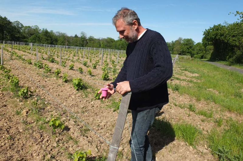 1clos_meslerie_young_chenin