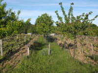 1table_rouge_parcel-orchard