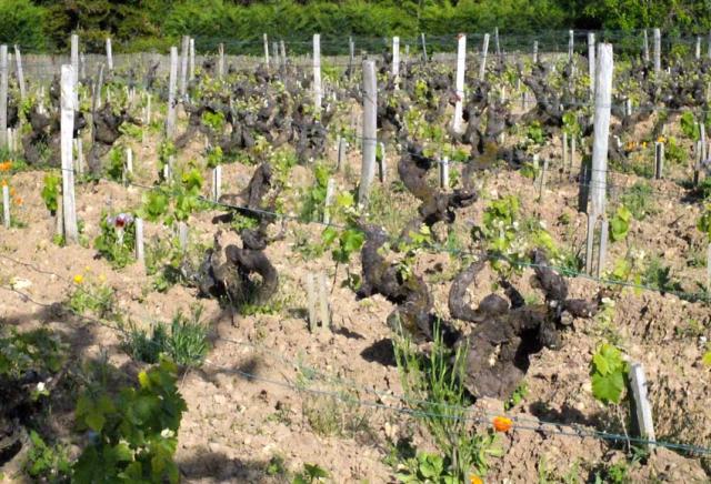 1table_rouge_parcel_old_vines