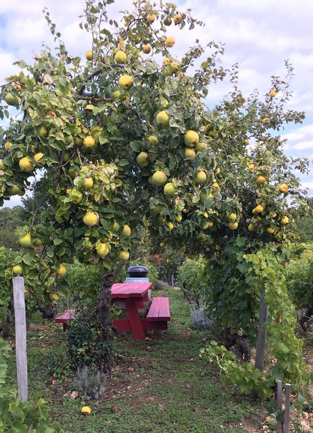 1table_rouge_fruit_tree