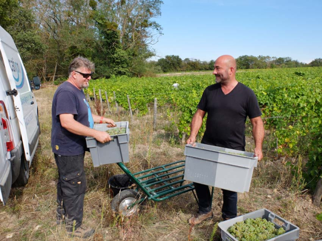 1harvest_laurent_saillard_arnaud