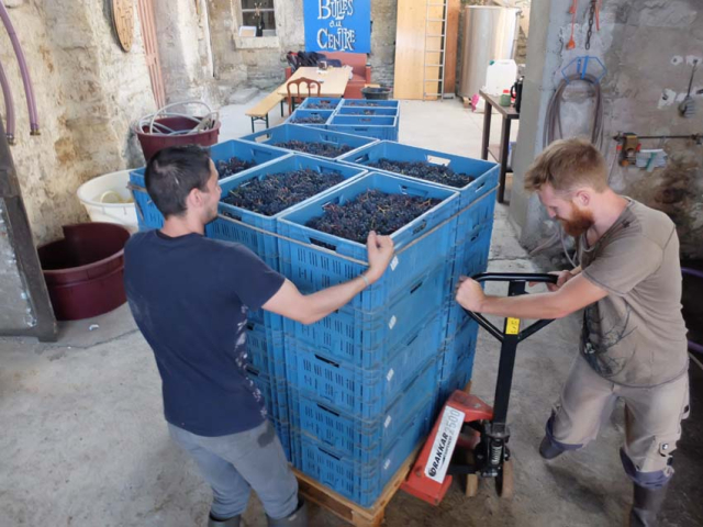 1harvest_pascal_potaire_gamay_leest