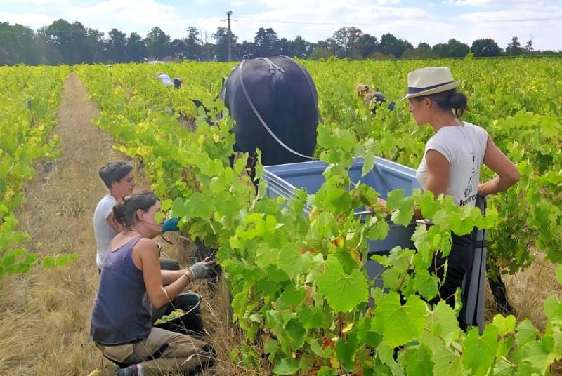 1agil_percherons_estelle_grapes_any