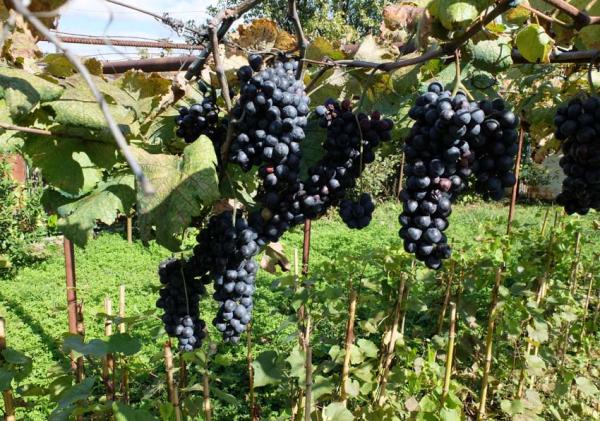 Wine Tasting Vineyards In France ének Peterson Georgia