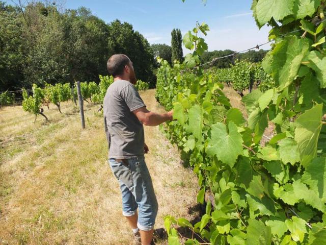 1choquet_vineyard3_gamay