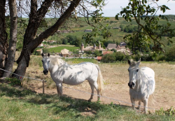 1philippe_jambon_horses_village