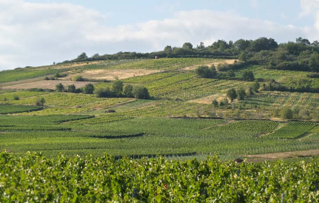 1philippe_jambon_parcels_vineyards