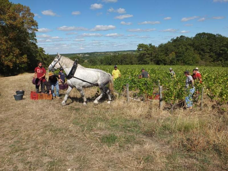 1harvest_gillet_white_horse