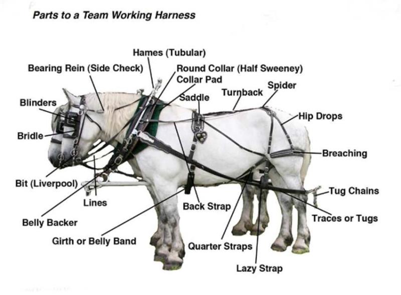 1agil_percherons_horse_tack_english_glossarry