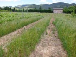 1ozil_vignes_crops