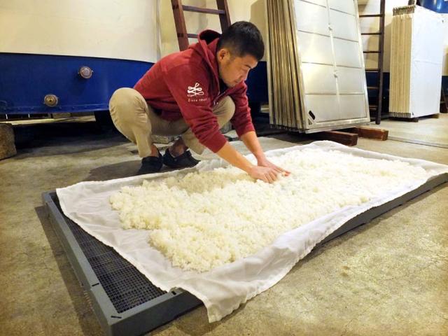 1matsuse_kimoto_steamed_rice