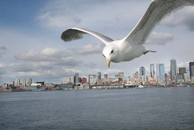 1mouette_seattle