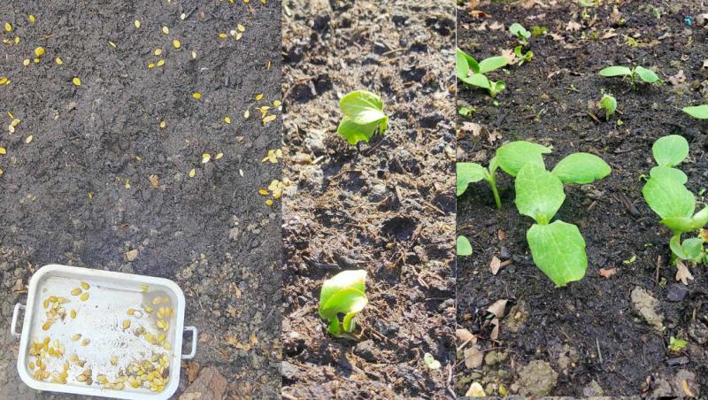 1stayhome_loire_pumpkins_seeds_shoots
