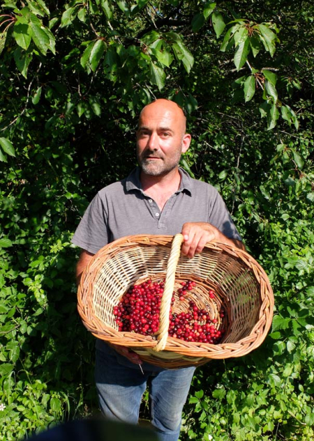 1vignerons_laurent_basket_cherries