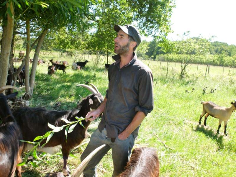 1adrien_baloche_among_goats