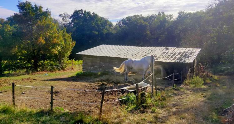 1maisons_brulees_horse_barn