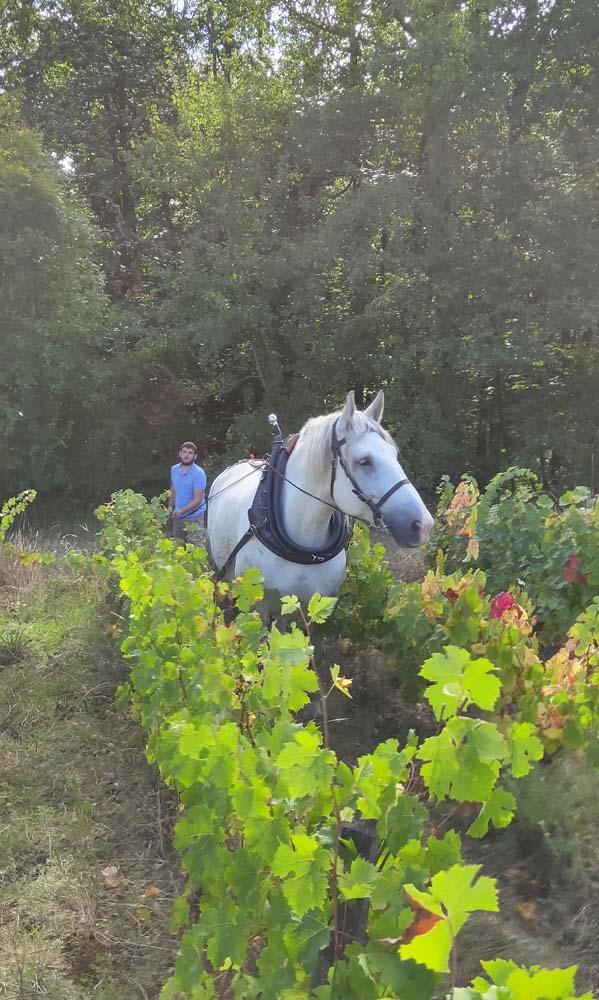 1maisons_brulees_horse_in_parcel