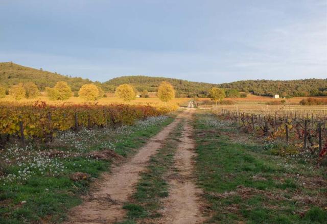1gasqui_vineyard_dirt_road1