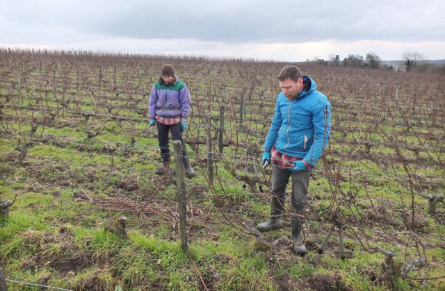 1anouk_paul_pruning_canes