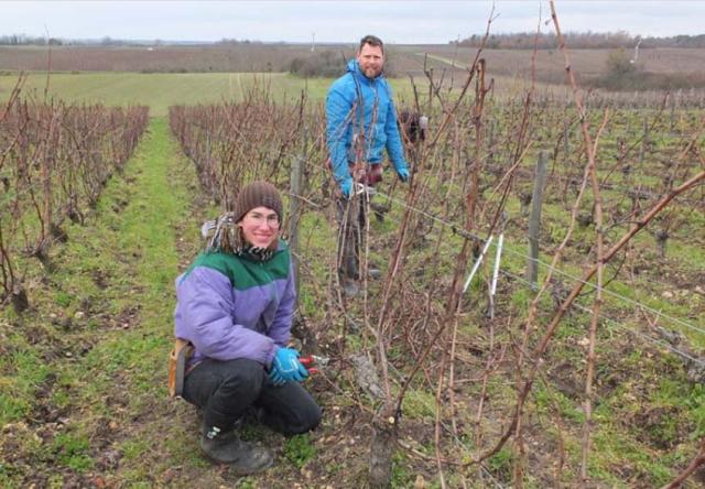 1anouk-paul-pruning