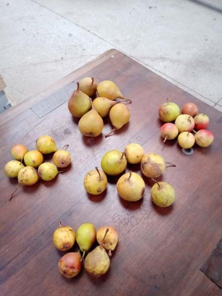 1poire_pear_varieties