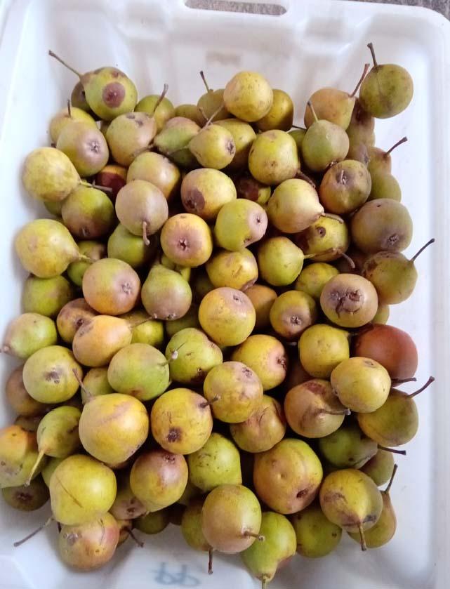 1capriades_box_of_pears1