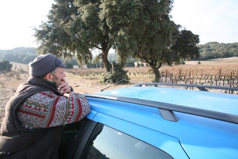 1pfifferling_voiture_vignes_arbres