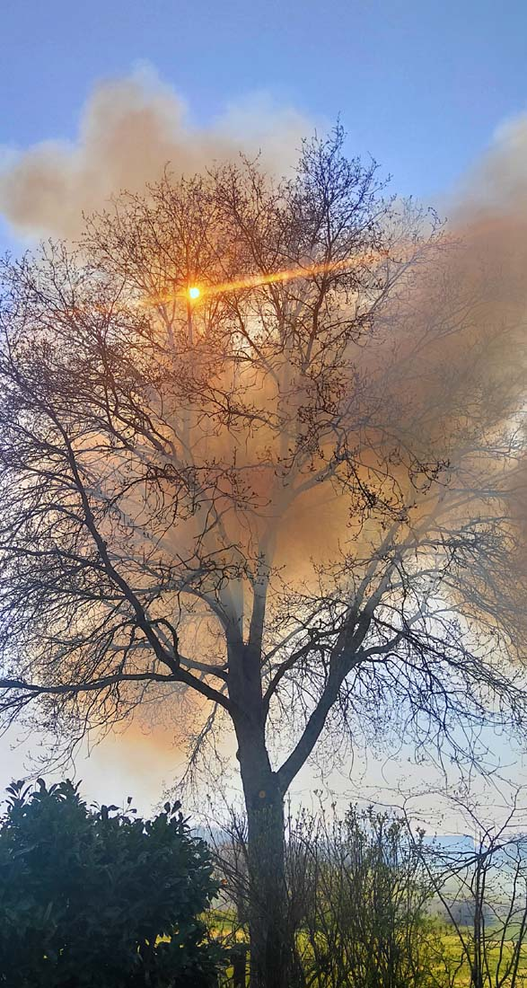 1stayhome_loire_fire_smoke_light_tree