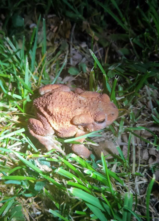 1stayhome_loire_cute_toad