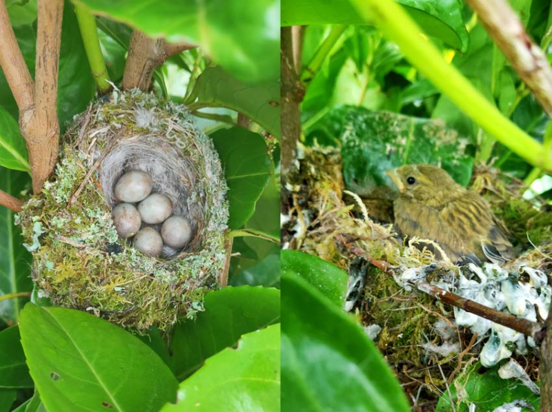 1stayhome_loire_nests