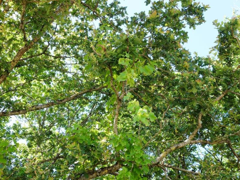 1adrien_baloche_vines_in_tree
